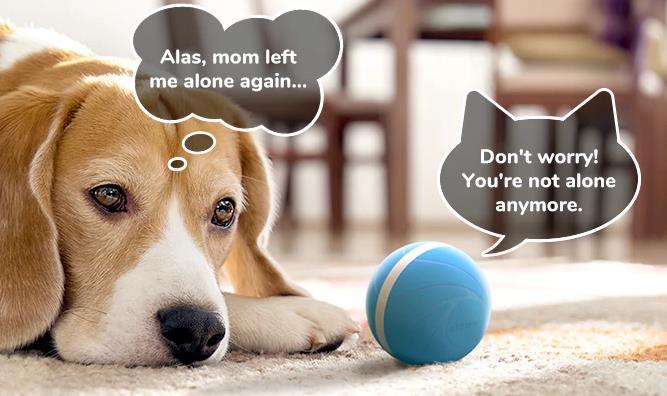 自動にペットと遊んでくれるWicked Ball