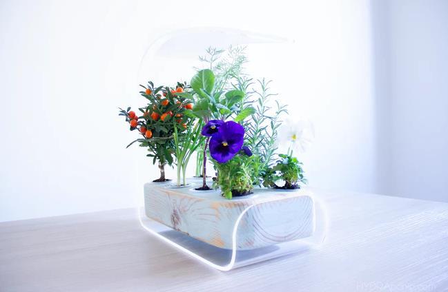 スマート室内家庭菜園機Hydraponia