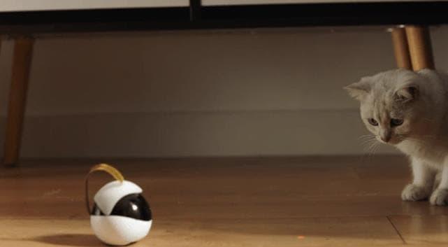 自動的に猫ちゃんのお世話をするロボットEbo